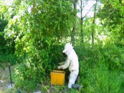 ecologie-imker-bijen-natuur-zuid-frankrijk