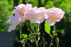 wilde-planten-plukken-geneeskrachtige-kruiden-tuin