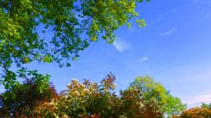 mispel-eik-blauwe-lucht-14.jpg