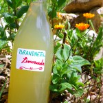 brandnetel limonade