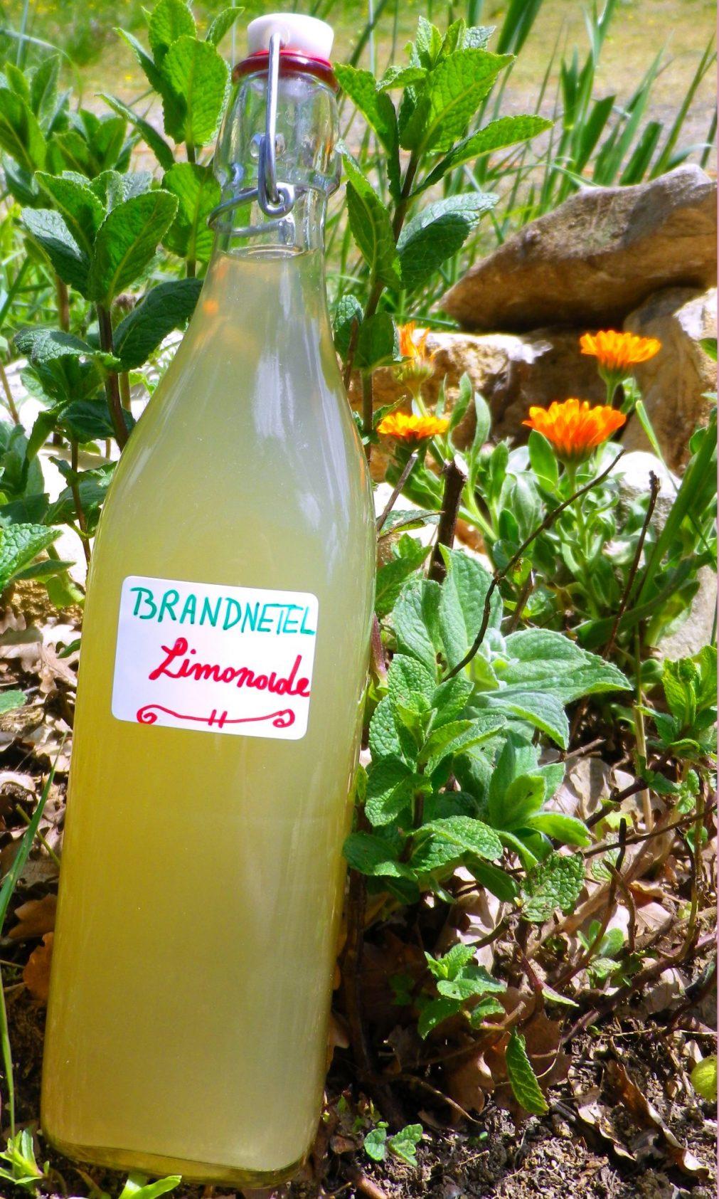 <!--:nl-->brandnetel limonade<!--:--><!--:fr-->brandnetel limonade<!--:-->