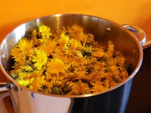 paardenbloemen in pot